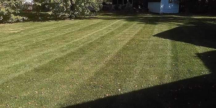 Lawn and grass cutting