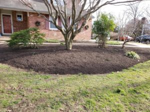 Mulching and bushes
